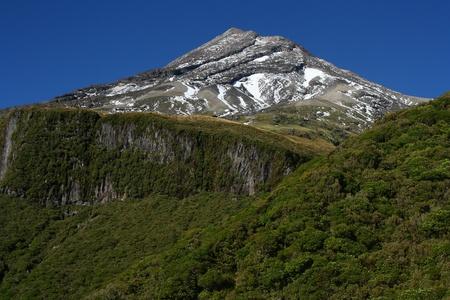 egmont: rainforest on slopes of Mount Taranaki, New Zealand