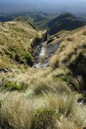 egmont: grass growing on lava in Mount Taranaki