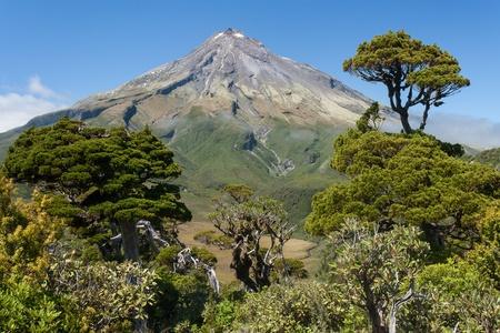 egmont: pine trees at Mount Egmont, New Zealand Stock Photo