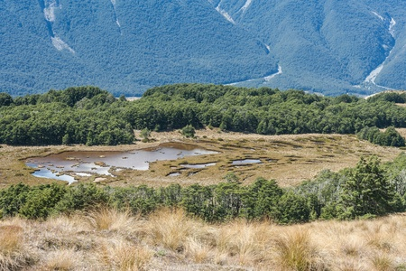 swampland: swampland in Arthur s Pass National Park Stock Photo