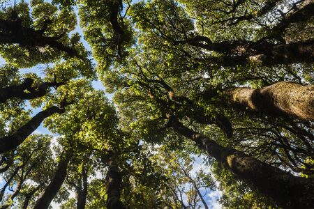 forest with native trees in New Zealand 스톡 콘텐츠