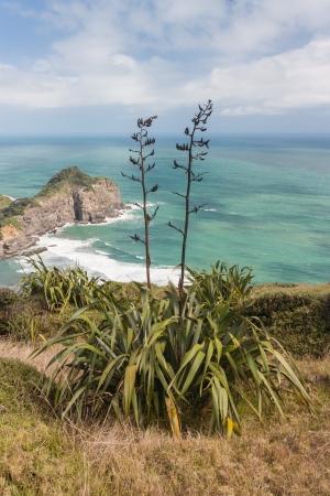 new zealand flax: New Zealand flax