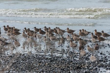waders: flock of waders Stock Photo