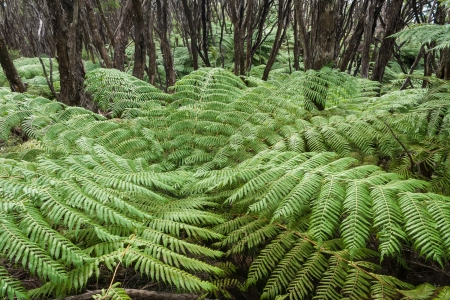 detail of tree fern growing in rainforest photo
