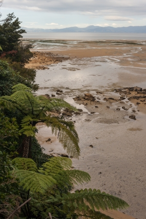 low tide at Abel Tasman National Park, New Zealand photo