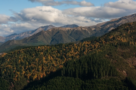 forested: forested slopes near Lewis Pass