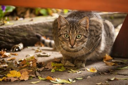 stalking: stalking cat