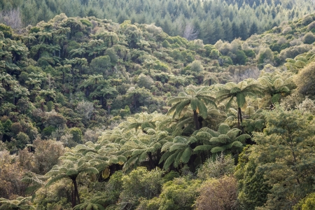 tropical native fern: mixed tropical forest in New Zealand