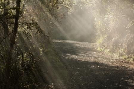 sunlight bursting through bush in New Zealand