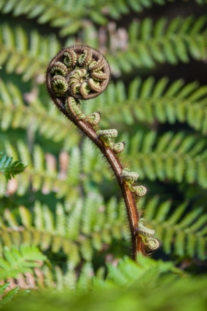 detail of fern frond 스톡 콘텐츠