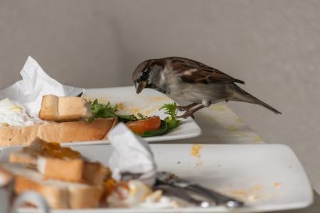 leftovers: sparrow feeding on leftovers Stock Photo