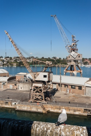 abandoned cranes in dockyard on Cockatoo Island photo