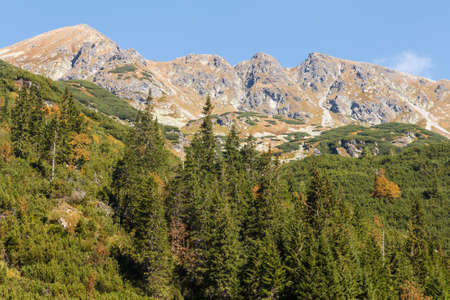 forested slopes in Western Tatras photo