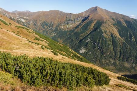 mugo: mountain pine growing in Western Tatras Stock Photo