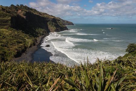 new zealand flax: Maori Bay near Muriwai