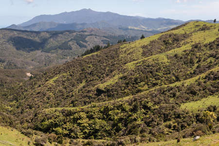 forested: forested valley in Coromandel Ranges
