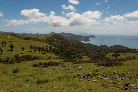 forested: forested slopes above Waikawau Bay in Coromandel Peninsula