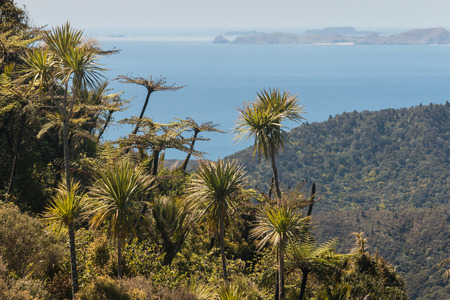 tropical native fern: tropical plants growing on slopes in Coromandel Stock Photo