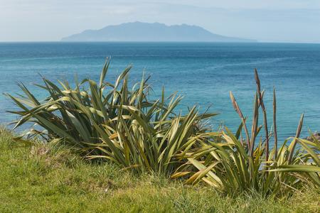 barrier island: New Zealand flax with Little Barrier Island on horizon