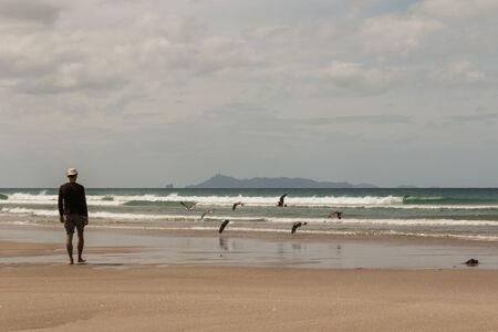 man watching seagulls flying over Pakiri beach Stock Photo