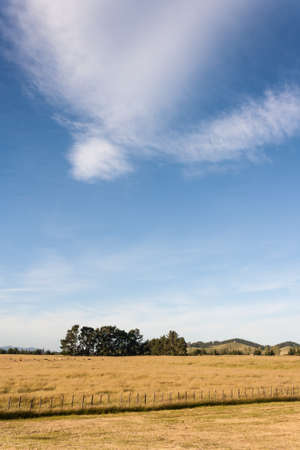 cirrus clouds above grassy meadow