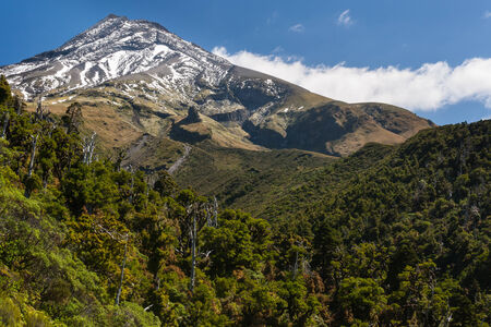forested: forested slopes of mount Taranaki