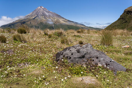 wildflowers on meadow at mount Taranaki photo
