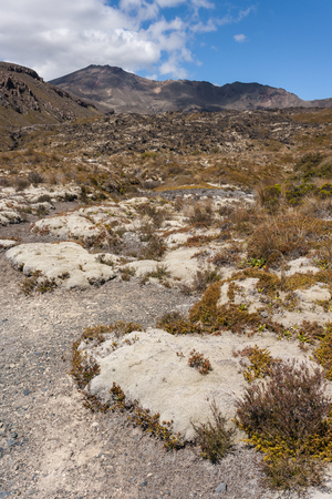 tongariro: vegetaci�n alpina en el monte Tongariro