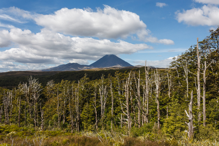 beech forest at Tongariro National Park photo