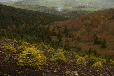 parc naturel: young trees on volcanic slope in massif central