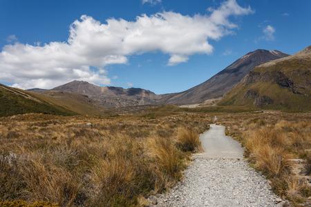 tongariro: track in Tongariro National Park