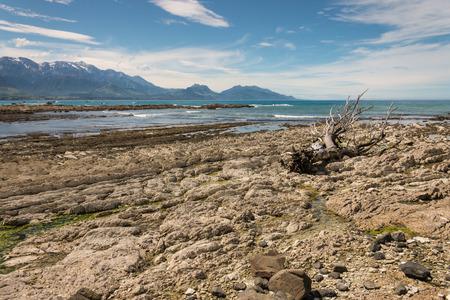 kaikoura: driftwood on Kaikoura coast