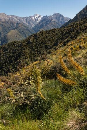 ranges: vegetazione alpina a Kaikoura Ranges, Nuova Zelanda