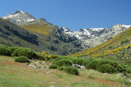 シエラ デ グレドスに標高の高い牧草地 写真素材