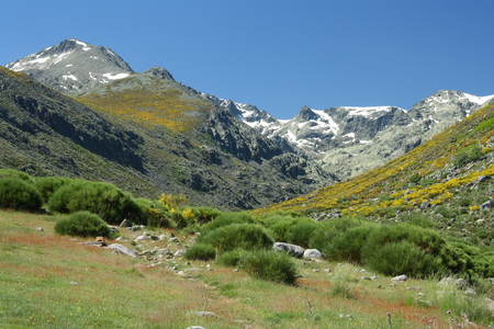 high altitude pastures in Sierra de Gredos