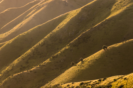 wither: sunset over Wither Hills, New Zealand