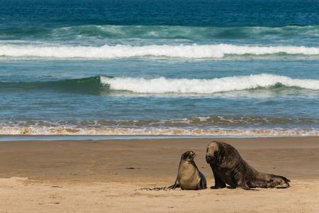 sea lions on sandy beach photo