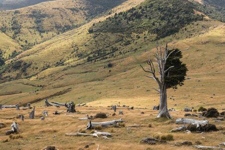 felled: felled trees on slopes in Banks Peninsula