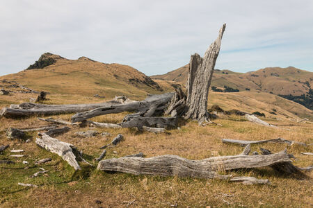 deforested: felled trees Stock Photo
