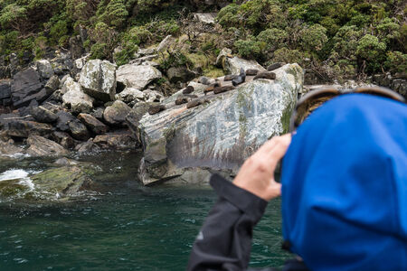 tourist watching seal colony in Milford Sound photo