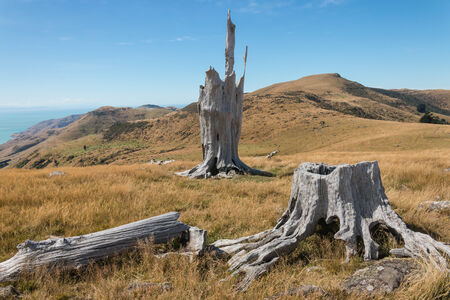 deforested: deforested slopes at Banks Peninsula, New  Zealand Stock Photo