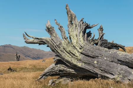 deforested: detail of felled tree Stock Photo