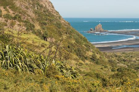 new zealand flax: Whatipu beach at Waitakere Ranges, New Zealand