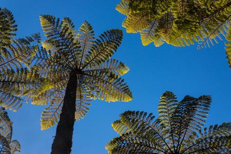 gigantic ferns against blue sky photo