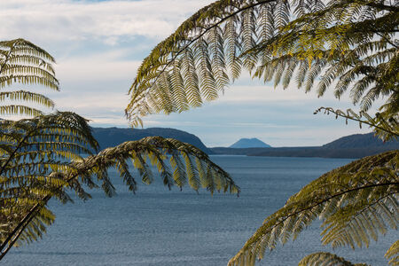 detail of fern fronds with lake Tarawera in background photo