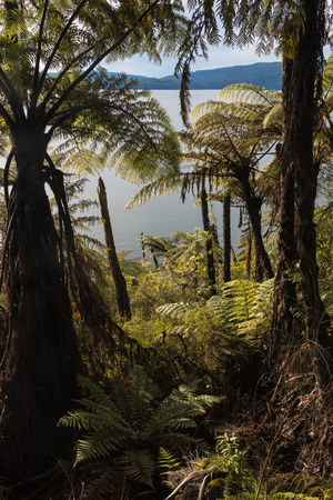 rainforest above lake Tarawera, New Zealand photo
