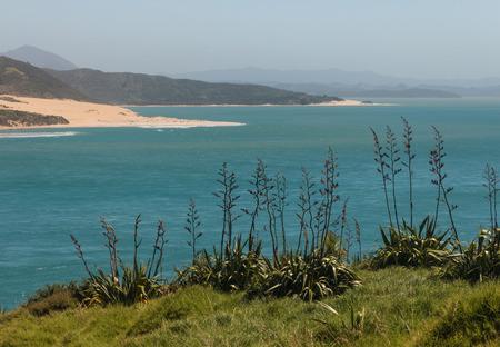 new zealand flax: Hokianga Harbour, New Zealand Stock Photo