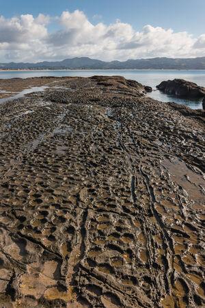 omaha: volcanic rock slabs in Omaha Bay, New Zealand