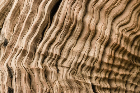 driftwood: detail of dry driftwood