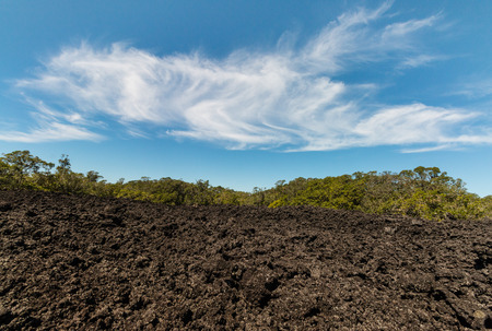 lava field: lava field on Rangitoto Island
